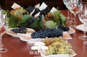 Cata especial, uvas y vino durante la vendimia