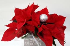 Decora con flores tu casa estas Navidades