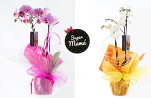 Orquídea o ramo de rosas, para el día de la madre