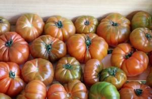Caja de 5 kg de tomates Raf, tomates pata negra